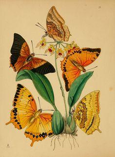 The cabinet of oriental entomology London :William Smith, 113 Fleet Street,[1848]