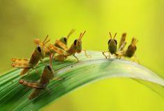 Grosshopper kids by Vincentius Ferdinand
