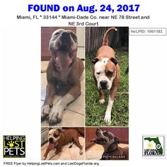 Spread the word to find my owner! This male brown/white #AmericanBulldog Mix was found near NE 78 Street & NE 3rd Court in #Miami. CONTACT Cigarzabal@hotmail.com Phone: (786) 873-8088  Dog is microchipped and his name is Rolsty.  More info photos to see dog's location on the HeLP map and to contact: http://ift.tt/2vn2FMF