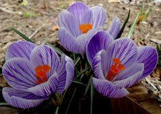still photograph of purple flower