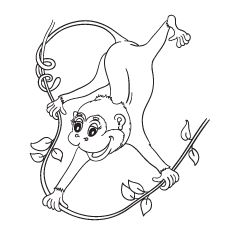 monkey coloring pages printable httpprocoloringcommonkey coloring pages printable free coloring pages pinterest