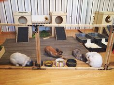 Rabbits Hutch.  Bunny, rabbit, hutch