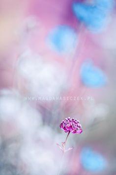 Something sweet by Magda Wasiczek - Photo 126049843 / 500px