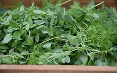 Bylinkové vlasové vody Herbs, Homemade, Plants, Herb, Hand Made, Planters, Diy, Plant, Spice