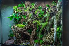 Rainforest Vivarium | by Sean Elliston