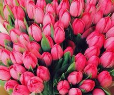 Image discovered by sündos. Find images and videos about pink, flowers and tulips on We Heart It - the app to get lost in what you love. Pretty Flowers, Pink Flowers, Dating Simulator Anime, Plenty Of Fish, Spring Images, My Passion, Tulips, Flower Arrangements, Rose