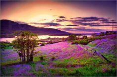 Poster Malerische Wildblumen bei einem Sonnenuntergang