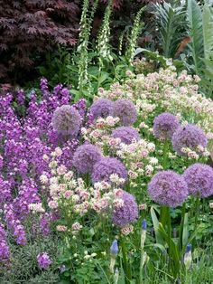 A harmonious mix of columbines, foxgloves, alliums and perennial wallflowers lends a cottage-garden style to the landscape. Flower Garden, Hardscape, Plants, Purple Garden, Gorgeous Gardens, Perennials, Garden Styles, Garden Borders, Beautiful Gardens