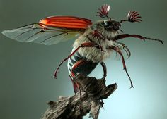 insect models