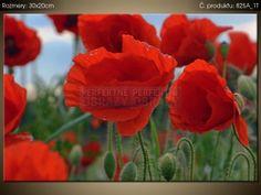 Tištěný obraz Divoké máky – Duncan 30x20cm 825A_1T