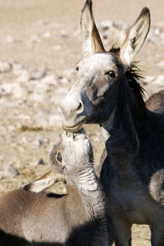 Wild Burro Rescue and Preservation Project