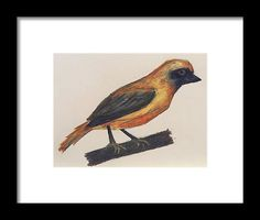 Chorister Robin Framed Print by Kelly Goss Oil Pastel Drawings, Pet Dogs, Pets, Robin Bird, Wall Art For Sale, Wild Dogs, Bird Art, Special Gifts, Giraffe