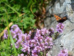 Foto di di Andrea Benelli - scattata da pietra di bismantova
