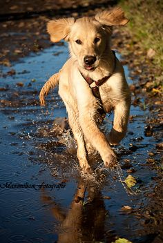 running dog - Bild & Foto von Maxii01 aus Tierkinder - Fotografie (29390717) | fotocommunity