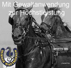 Was die Pferde bei dem Duhner Wattrennen in Cuxhaven erleiden, ist jenseits der Grenze des Akzeptablen.
