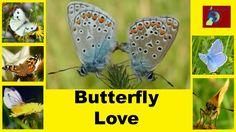 Wonderful Miniature World of Butterflies