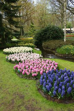 Circles of Hyacinths, Keukenhof Gardens, The Netherlands.  Photo: KarlGercens.com, via Flickr