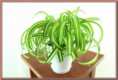 (paid link) Indoor plants safe for cats   House of Plants #catsafehouseplants