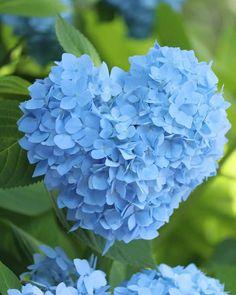 Strange Flowers, Unusual Flowers, Beautiful Flower Arrangements, Beautiful Flowers, Pretty Flowers, Beautiful Gardens, Blooming Flowers, Wild Flowers, Anime Boy Sketch
