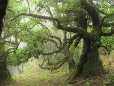 Fairy Forest | Mystisches Grün: Der Feenwald auf Madeira - Waldspaziergang