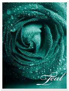 -Teal- more photomanipulation Rainbow Roses Series Red/Simply Love - [link] Orange/Burning Desire - [link] Yellow/Luminous - [link] Green/Intimate Jealo. Shades Of Turquoise, Shades Of Blue, Tiffany Blue, Teal Green, Aqua, Purple, My Favorite Color, My Favorite Things, Rainbow Roses