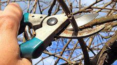 obrázek z archivu ireceptar.cz Pruning Shears, Planting Seeds, Wood Watch, Garden Tools, Accessories, Wooden Clock, Gardening Scissors, Yard Tools, Seed Starting