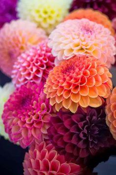 Dahlia-Dahlia leuke aan deze bloem: de structuur van de bloem. soort bloemwerk: kan eigenlijk in al het bloemwerk gebruikt worden
