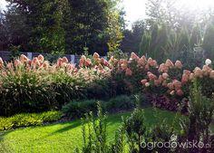 Moja codzienność - ogród Oli - strona 1608 - Forum ogrodnicze - Ogrodowisko