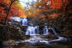 Autumn color #7 by TigerSeo. @go4fotos