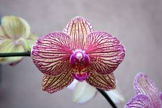 """""""Orchid"""" by TMDSouza"""