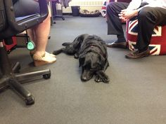 Canine collaboration at the Petplan pet insurance office