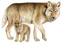 Wolves by Fiammetta Dogi