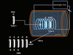 Can Our DNA Electromagnetically 'Teleport' Itself? One Researcher Thinks So   Popular Science