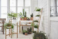 Conservatory: MODERN TWIST