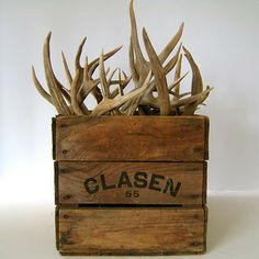 Box of antlers- great idea to do with all the deer heads the hubs want to hang on the wall. Deer Decor, Rustic Decor, Antler Decorations, Antler Centerpiece, Rustic Wood, Vintage Wood Crates, St Pierre, Antler Art, Antler Crafts