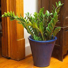24 of the Easiest Houseplants You Can Grow - Zeezee Plant