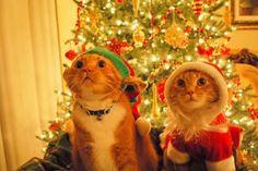 Lembre-se, se o Natal não for encontrado no seu coração, também não o encontrará debaixo da árvore.