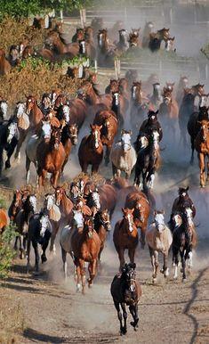 ♂ Wild life animal photography #animals #houses Traffic Jam...
