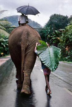 Young man walks behind elephant. Sri Lanka, 1995.