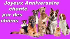 Joyeux Anniversaire chanté par des chiens Dogs, Singing Happy Birthday, Birthday Humorous, Happy Animals, Pet Dogs, Doggies