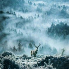 Just Pinned to Forests: Photo http://ift.tt/2hyYV1J