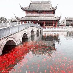 Zhou Zhuang Water Village, China.  Photo by @lic80l