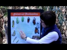 Welcome to the Ellwood Monarch Butterfly Grove in Goleta