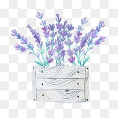 Beautiful Lavender, Lavender, Purple, Flower PNG Transparent Clipart Image and PSD File for Free Dow Flower Png Images, Picsart Png, Beautiful Flower Designs, Flower Backgrounds, Clipart Images, Purple Flowers, Flower Decorations, Design Elements, Art Drawings