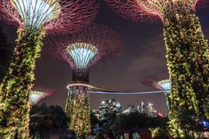 Gardens by the Bay: Luminous Supertrees From the Future - Northabroad Large Greenhouse, Indoor Waterfall, Baobab Tree, Dutch House, Singapore Travel, Gardens By The Bay, Guinness World, Blooming Plants, Types Of Flowers
