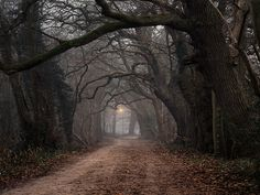 Dark forest in the Netherlands.