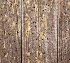Timber Preservation & Woodworm Treatment, London, Surrey, Essex, Berkshire, Buckinghamshire, Hertfordshire, Sussex