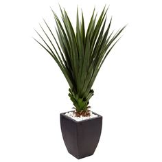 Nearly Natural Spiked Agave Artificial Plant in Black Planter (Indoor/Outdoor), Green Small Artificial Plants, Artificial Turf, Artificial Flowers, Silk Plants, Foliage Plants, Black Planters, Agave Plant, Square Planters, Office Plants