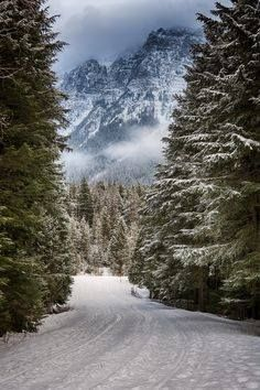 Mountain Winter #snow #mountains #pines #nature #winter