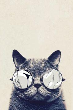 Poster - Gato Cool
